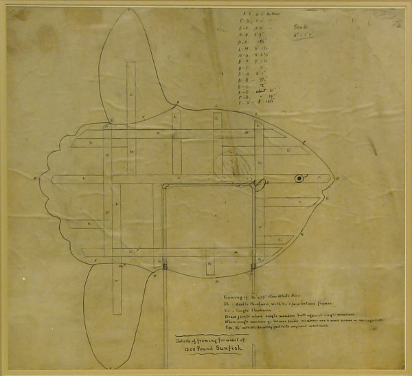 Brimley's drawing of the mola model with measurements