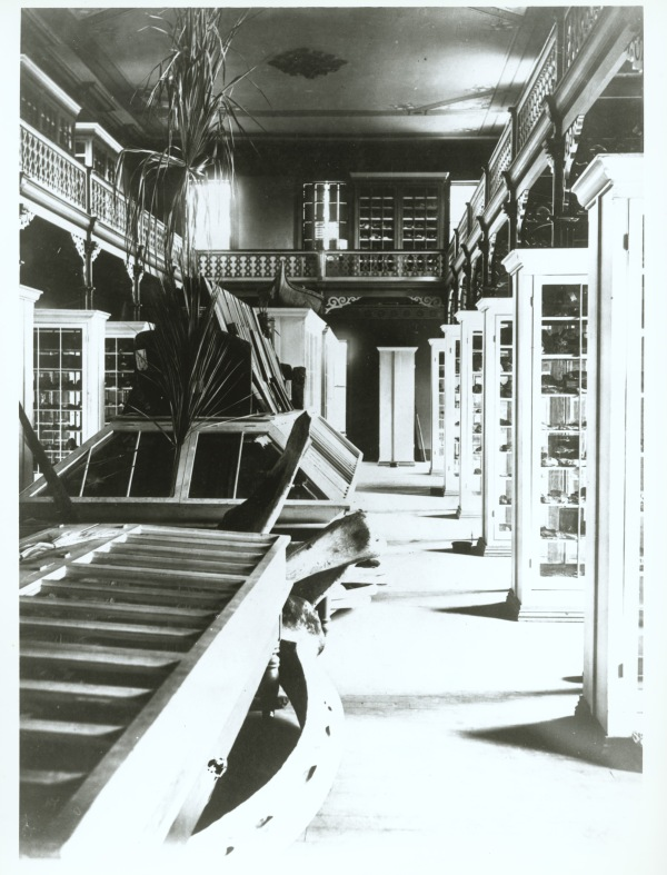 nterior of the Museum showing bones of right whale under a table of wood specimens. Photo taken between 1876 and 1894.