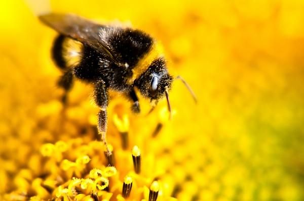 Buzz. By Zanthia, Flickr.com