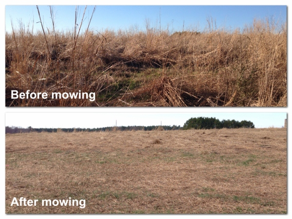 mowed prairie before and after