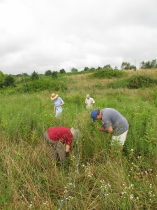 Volunteers in the field monitoring milkweed for MLMP