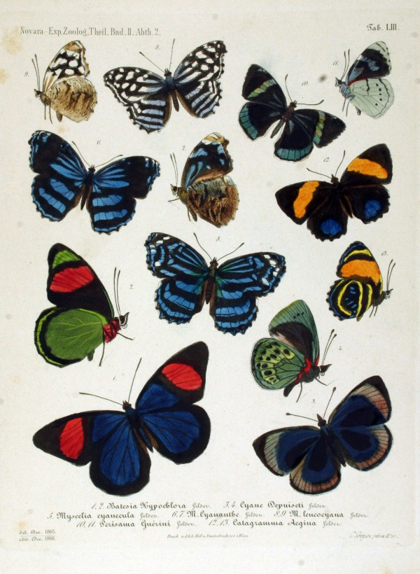Vintage Field Guide of Lepidoptera