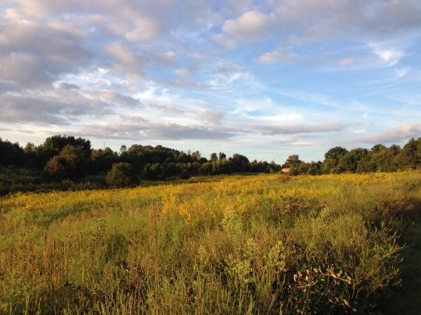 The prairie during golden hour