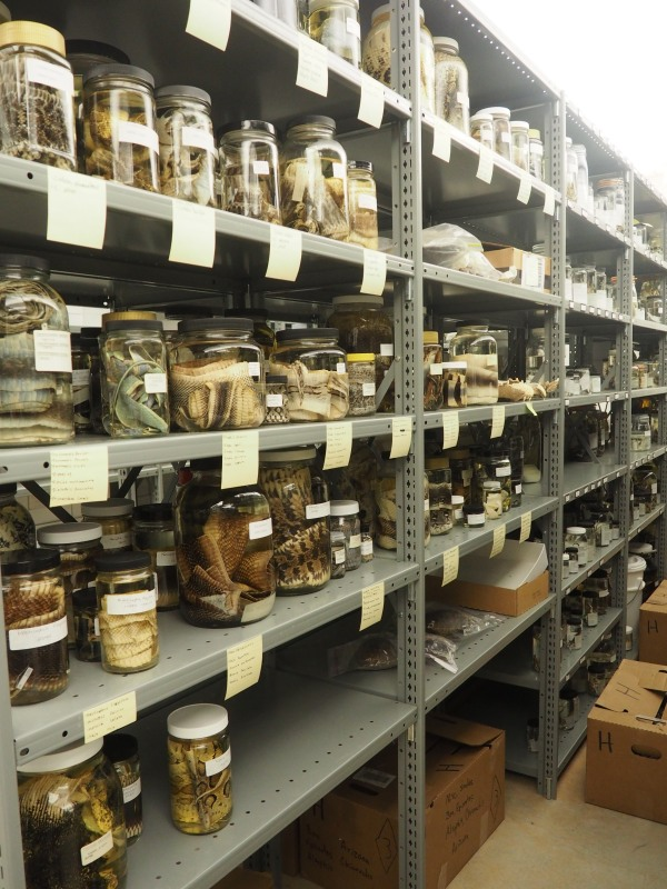Rows of Jars at the Research Lab