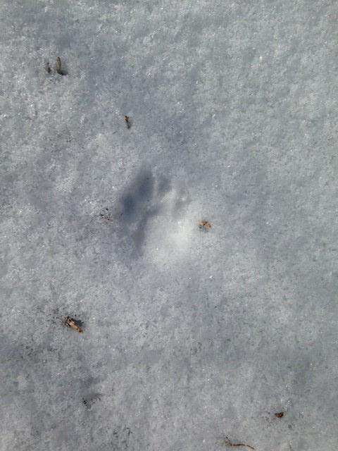 cat track