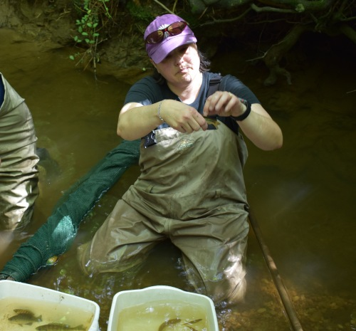 Gabriela Hogue, the Museum's fish collection manager, shows off a creek chub.