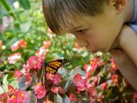 Boy with monarch butterfly. Photo: US Fish and Wildlife Service..